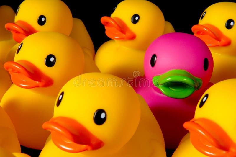 Ouse ser diferente - os patos de borracha no preto fotos de stock