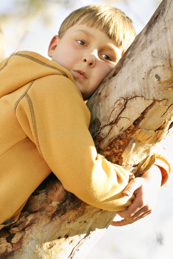 Download Out on a limb stock image. Image of kidspics, climb, resting - 65917