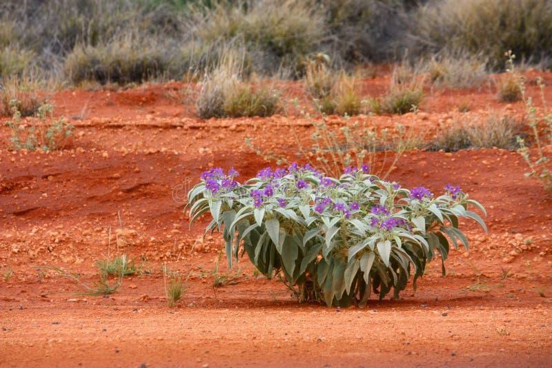 outback stockfotos