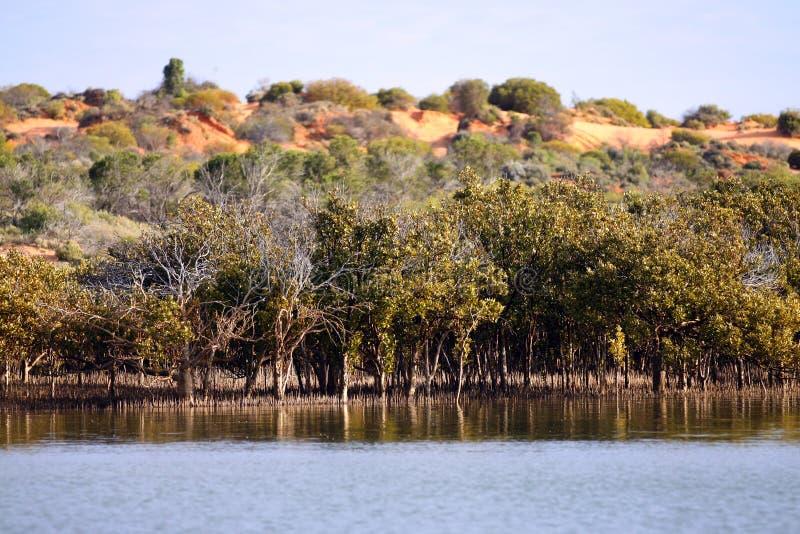 Outback havMangroves, nära Redbanks upptill av spenceren Gul royaltyfri bild