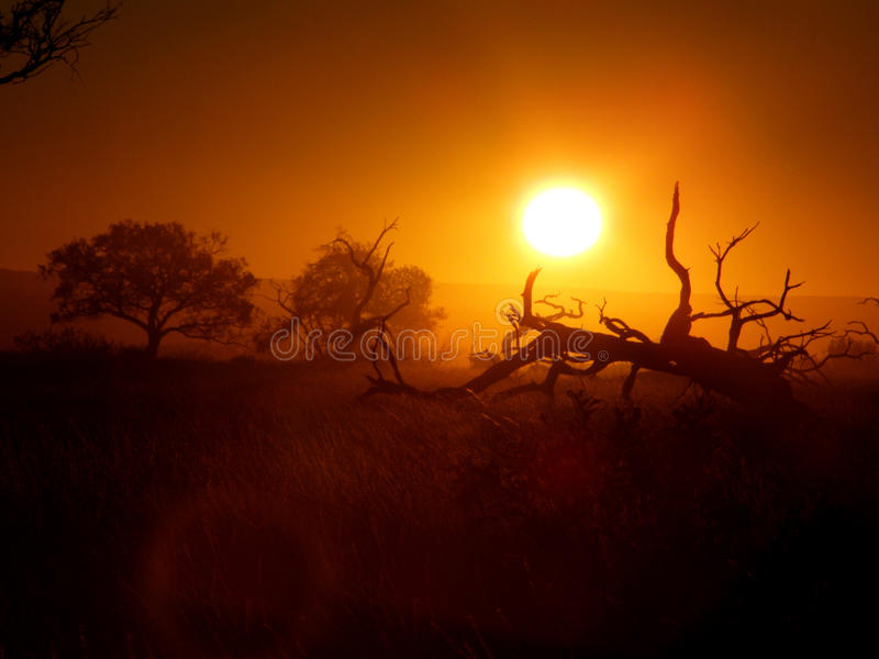 Outback tree royalty free stock photo