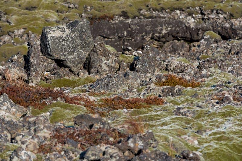 outcroppings Musgo-cobertos da rocha nos campos de lava de Islândia foto de stock royalty free