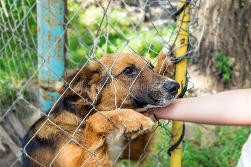 Outddor Homeless animal shelter. Sad mongrel dog happy visitor s stock photography