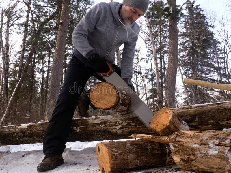 Outdoor activities: a man saws wood in a forest for a fire. Arrangement of a tent camp stock photo
