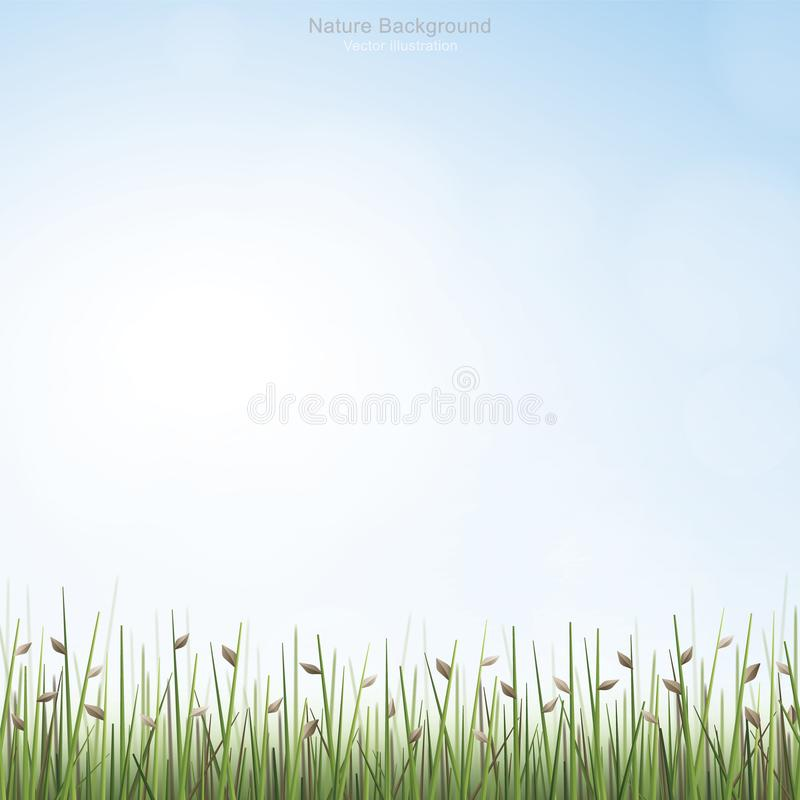 Outdoor background of green field with blue sky and soft light background. Vector illustration stock illustration
