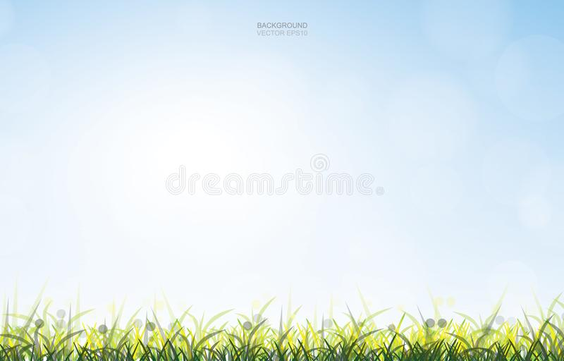 Outdoor background of green grass field with soft light and blue sky background. vector illustration