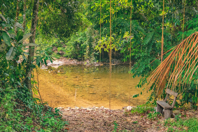 Outdoor bench near a small river in Thai forest stock photo