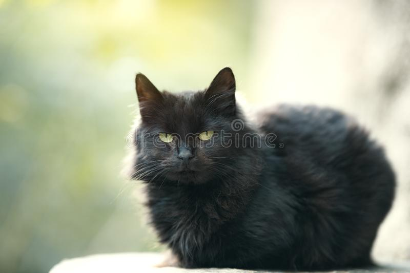 Outdoor black cat photo. Outdoor black cat look at you stock images