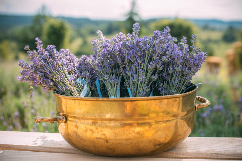 Outdoor decor with lavender plants in decorative metal bronze pots . royalty free stock image