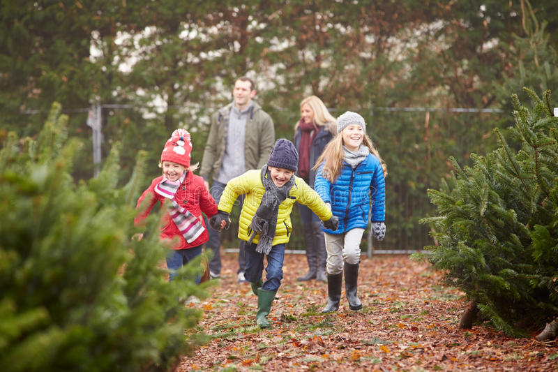 Download Outdoor Family Choosing Christmas Tree Together Stock Photo - Image of parent, choosing: 41519648