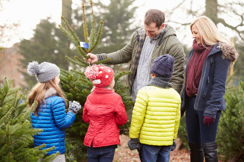 Download Outdoor Family Choosing Christmas Tree Together Stock Photo - Image: 41519638