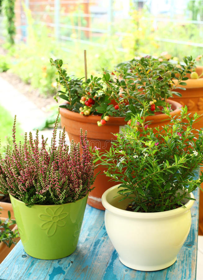 Outdoor Flower Pots Royalty Free Stock Images