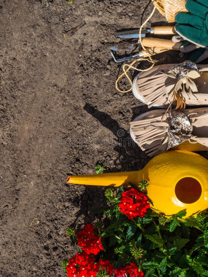 Outdoor gardening tools, geranium, watering can and boots on the soil. Copy space royalty free stock photos