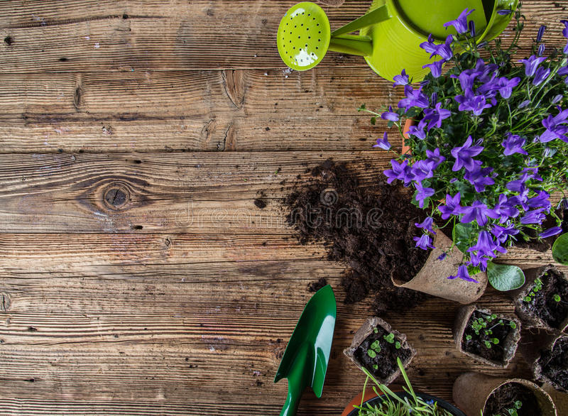Outdoor gardening tools and plants. royalty free stock image