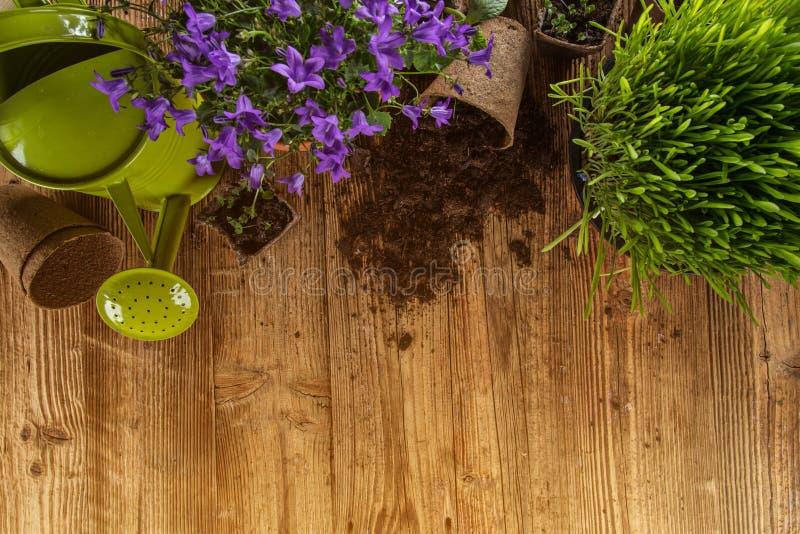 Outdoor gardening tools and plants. Outdoor gardening tools, plants and can, close-up stock image