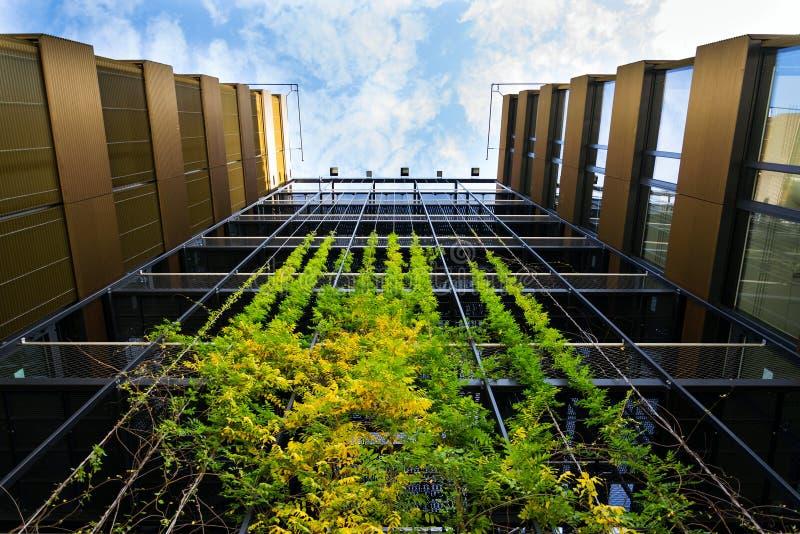 Outdoor green living wall, vertical garden on modern office building stock images