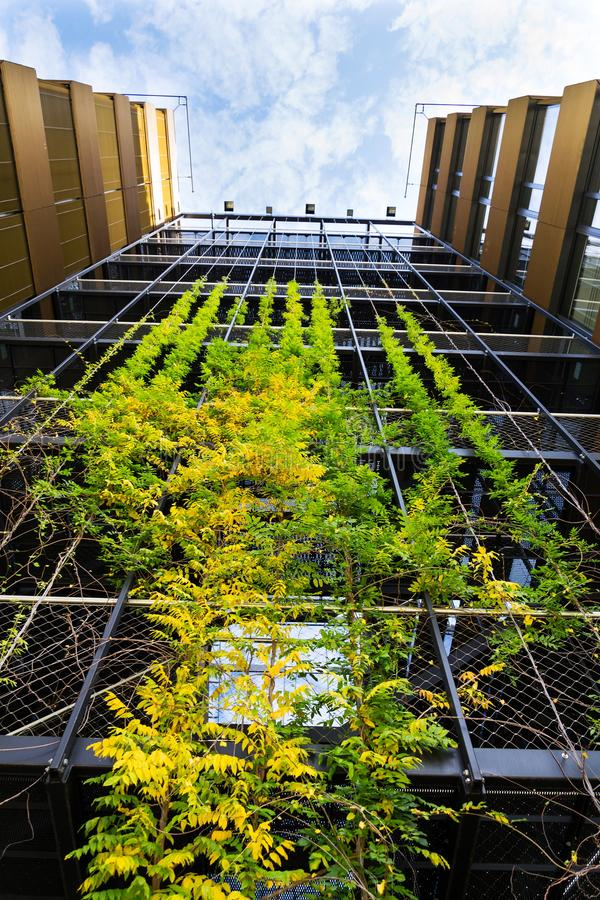 Outdoor green living wall, vertical garden on modern office building. Sprawling plants on outdoor green living wall, vertical garden on modern office building stock image