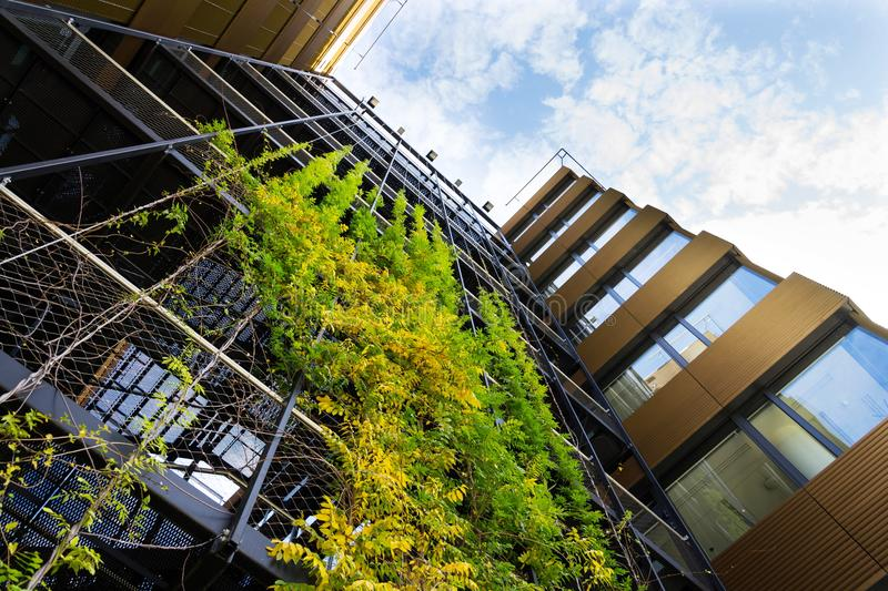 Outdoor green living wall, vertical garden on modern office building royalty free stock images