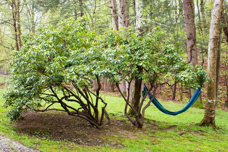 Outdoor hammock in the backyard perfect place to relax. In summer royalty free stock photo