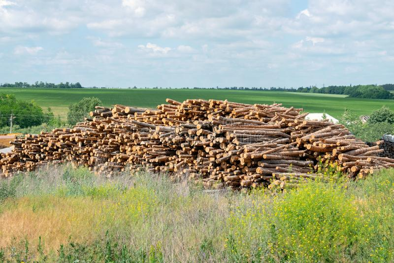 Outdoor industry storage of logs on the background of summer green field. Piles, stacks of wooden logs, trunks ready for. Construction, building, heating or stock photography