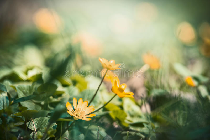 Outdoor nature background with pretty yellow flowers stock image download outdoor nature background with pretty yellow flowers stock image image of flowers grass mightylinksfo