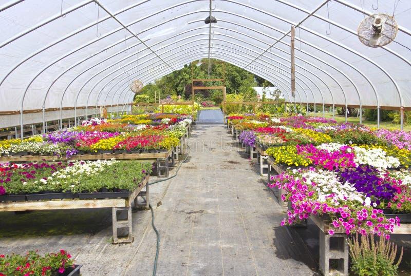 Outdoor nursery Willamette valley Oregon. Outdoor nursery and canopies Willamette valley Oregon royalty free stock photos