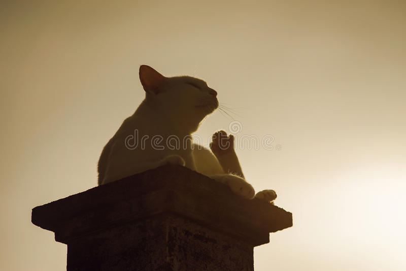 Outdoor portrait, silhouette of a thai cat has sitting on pillar with sunset light, filtered image, selective focus.  royalty free stock photography