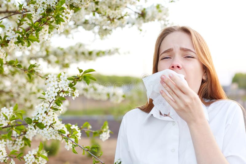 Outdoor shot of displeased Caucasian woman feels allergy, holds white tissuue, stands near tree with blossom, feels unwell, stock images
