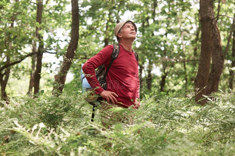 Outdoor shot of eldery man travels with backpack trough forest, backpacker goes along road along wood, has active vocation in stock photo
