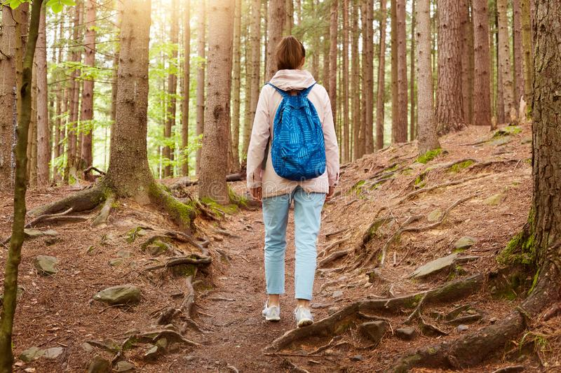 Outdoor shot of girl traveler walking in forest, girl with blue backpack in woods, young lady walks along forest path, woman with royalty free stock photos