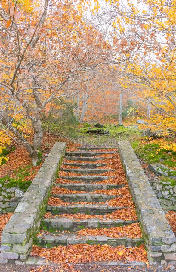 Outdoor stairs in the forest during a fall day. The trees have a few yellow leaves at the branches but there are many brown and. Orange leaves on the steps os royalty free stock photography