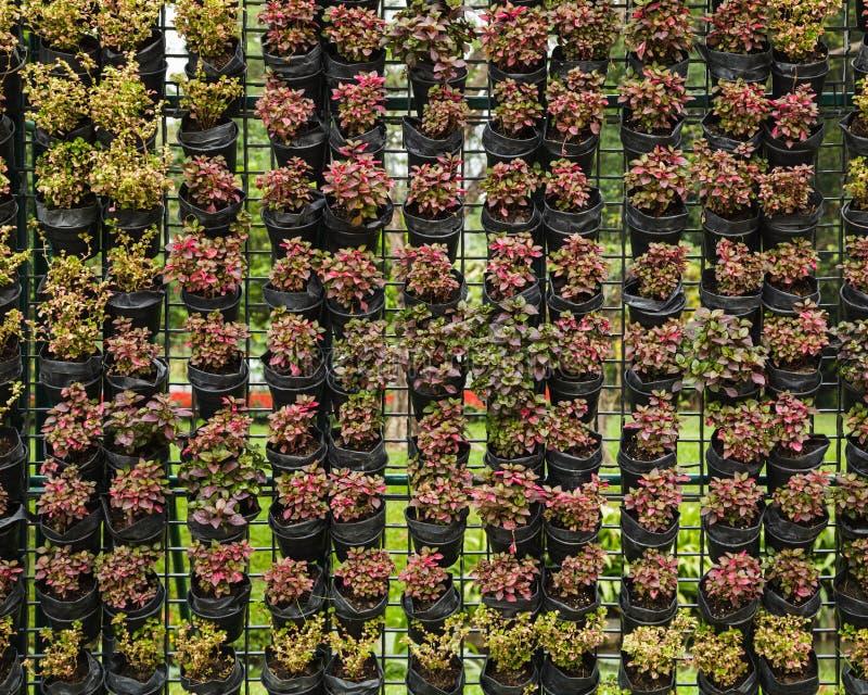 Outdoor vertical garden royalty free stock images