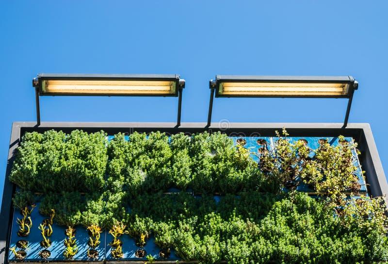 Outdoor vertical wall garden royalty free stock photo