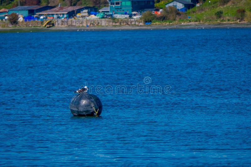 Outdoor view of seagul resting over a floating structure with a buildings in the horizont located in Chiloe island. Chile royalty free stock image