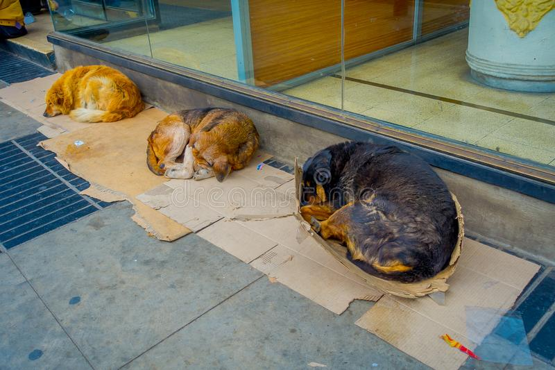 Outdoor view of Stray dog sleeps at the sidewalk in a coastal town in Vina del mar Chile.  royalty free stock photos