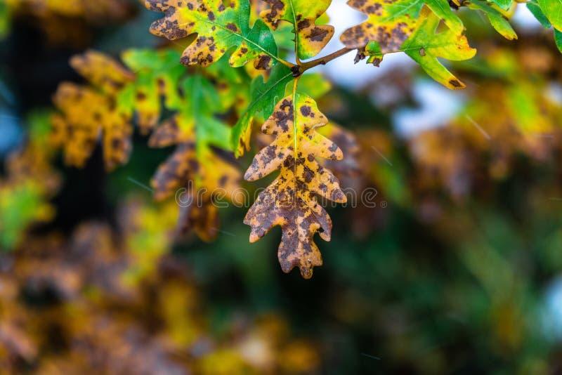 Дерево и листья во время осени падения после дождя стоковые изображения rf