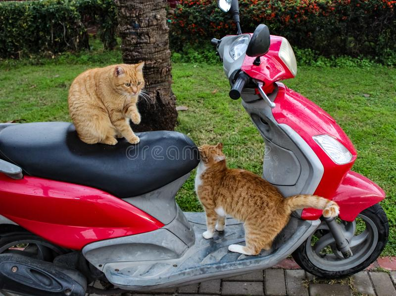 Cats and motor stock photo