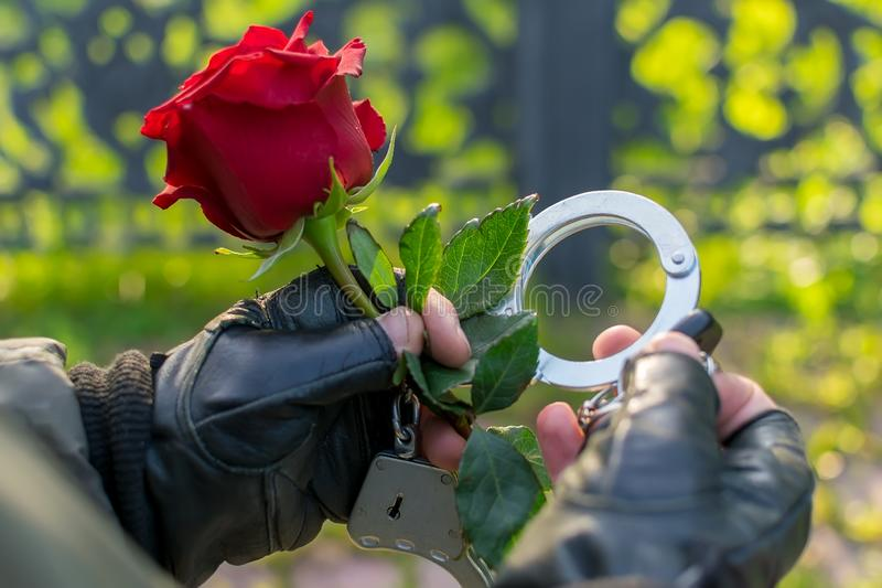 The hand of a man in handcuffs gives a red rose flower. Outdoors, close up, the hand of a man in leather gloves and handcuffs, extends and gives a red rose royalty free stock photo
