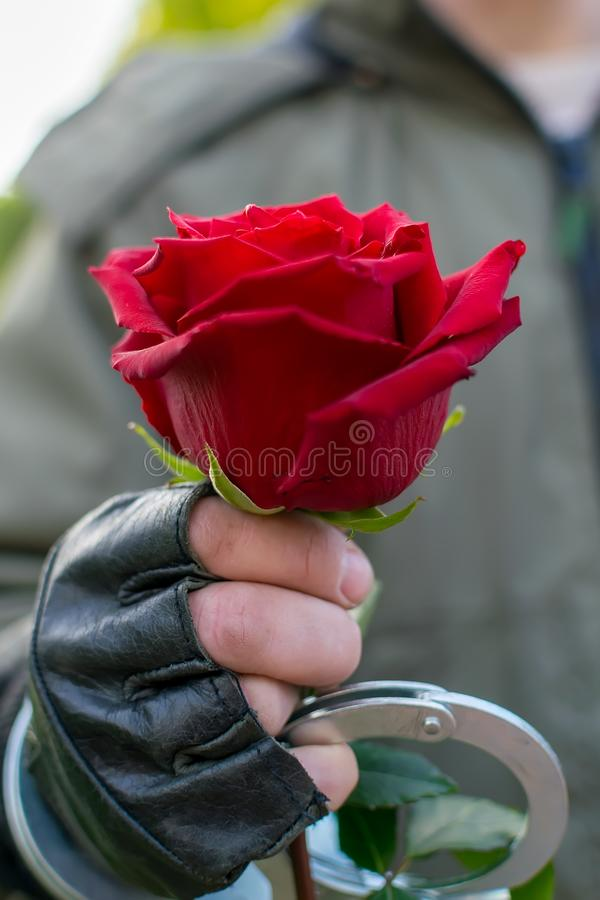 The hand of a man in handcuffs gives a red rose flower. Outdoors, close up, the hand of a man in leather gloves and handcuffs, extends and gives a red rose stock photography