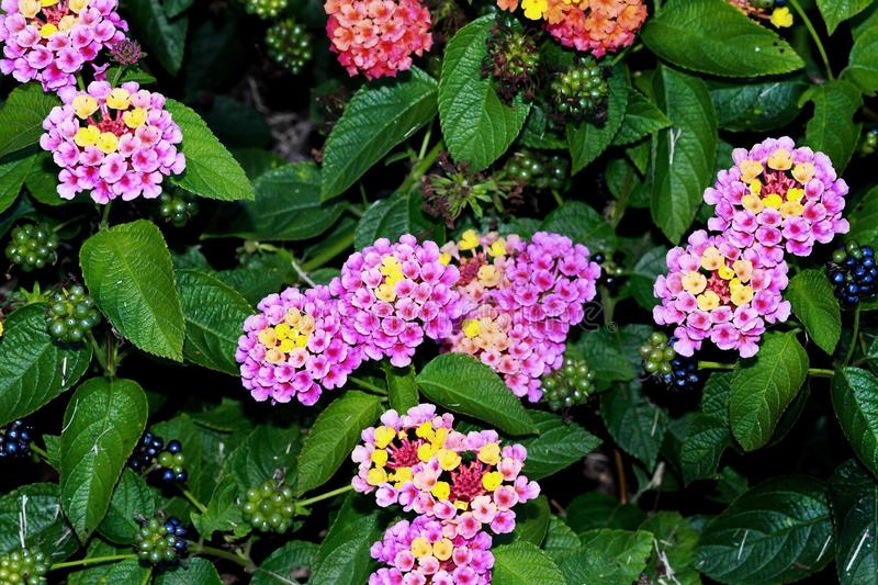Edibles. Outdoors nature flowers colorful berries fruits leaves stock photo