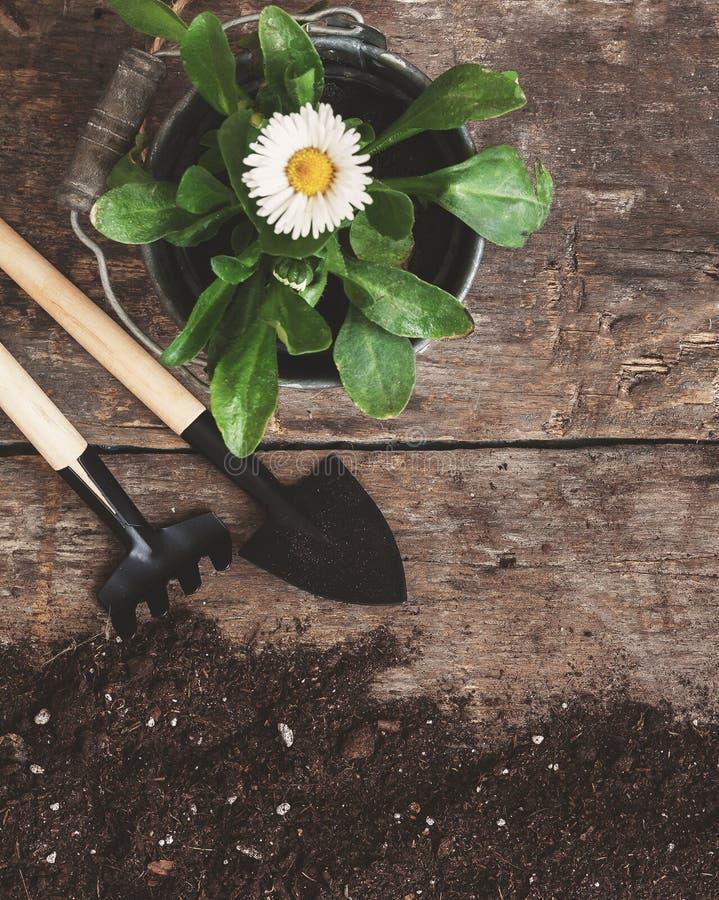 Outil de jardin, pelle, râteau, boîte d'arrosage, seau, comprimés pour le pla photographie stock libre de droits