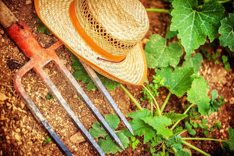 Outils d'agriculteur dans le jardin photographie stock libre de droits
