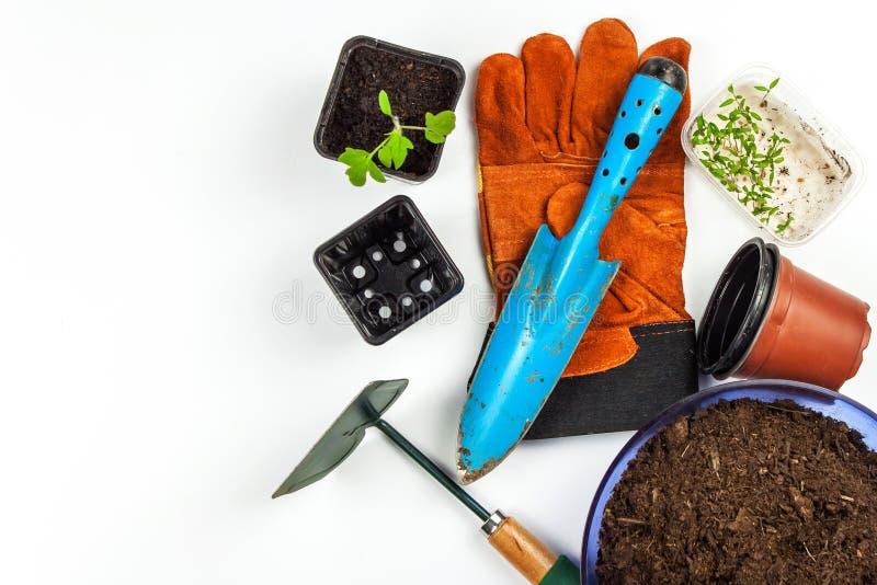 Outils de jardin Gants et scoop Légumes grandissants à la ferme Plantation des tomates Jardinier d'utilités photo libre de droits