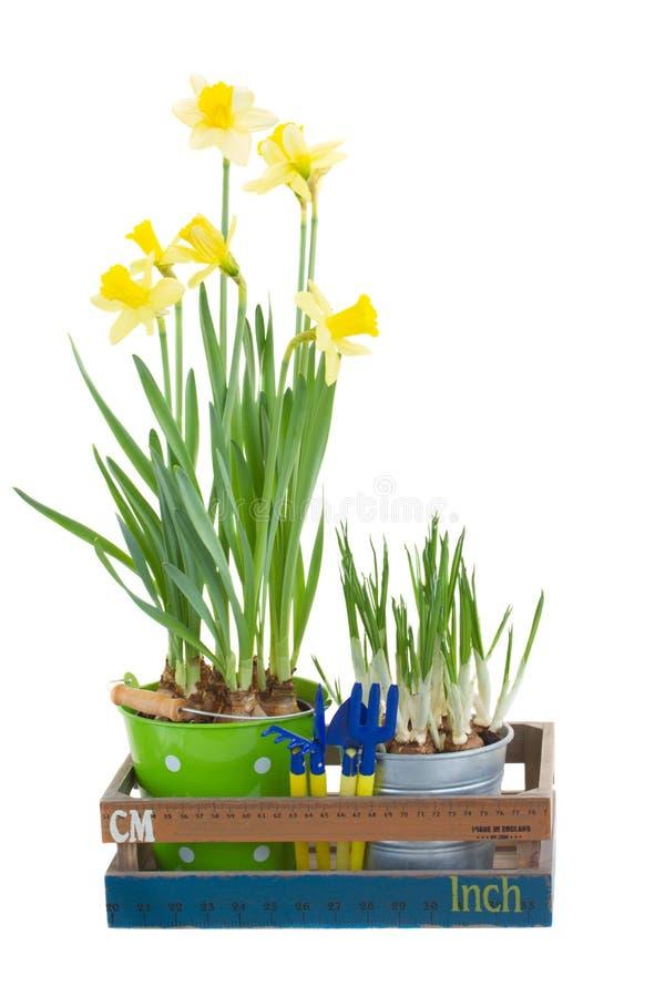 Outils de jardinage avec des pots de fleur image stock image du pelle canette 37758649 - Outils de jardinage avec images ...