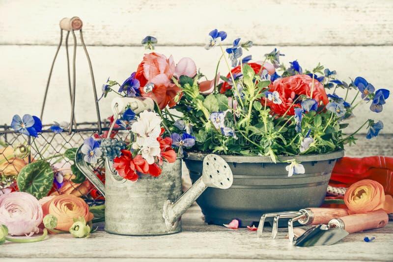 Outils de jardinage avec la boîte et les pots d'arrosage avec des plantes et des fleurs sur la table en bois au fond blanc de mur images libres de droits