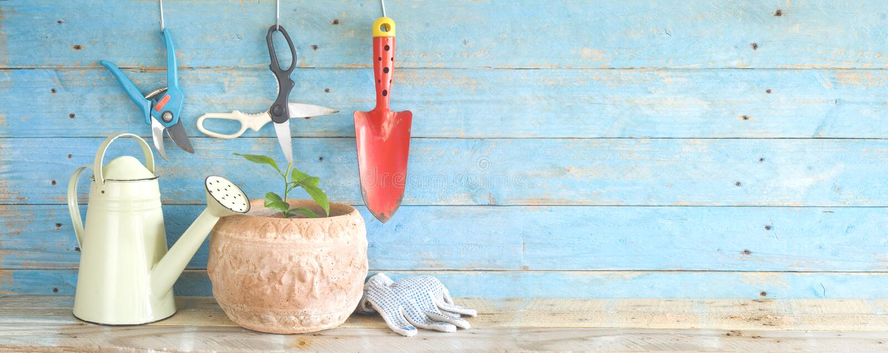 Outils de jardinage et jeune citronnier photo libre de droits