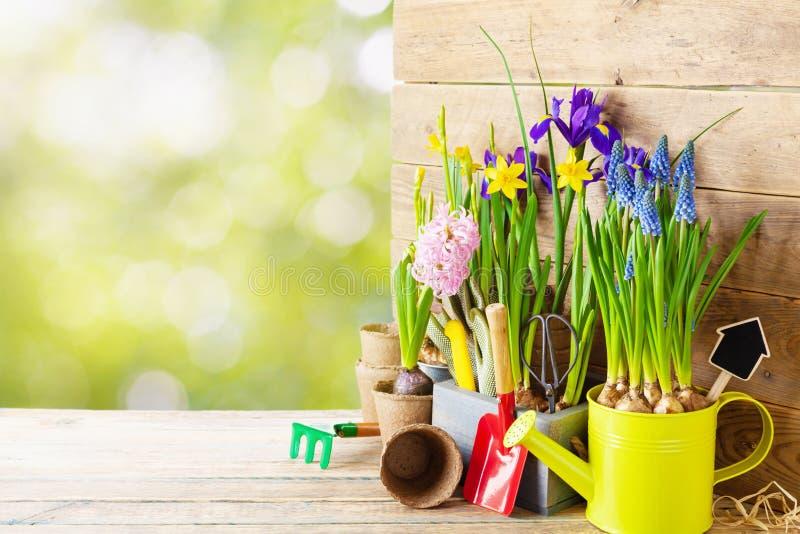 Outils de jardinage et jeune plante des fleurs de ressort pour planter sur le parterre dans le jardin Concept d'horticulture Fond photo libre de droits