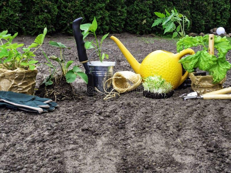 outils de jardinage pour faire du jardinage, gants, tomate de jeunes plantes, basilic, paprika, fraise, boîte d'arrosage, travail image stock