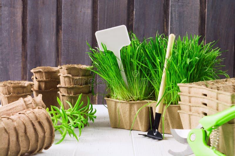 Outils de jardinage de ressort pour des légumes de jeune plante Herbe verte, pots organiques, label pour le texte et secteur vide photographie stock