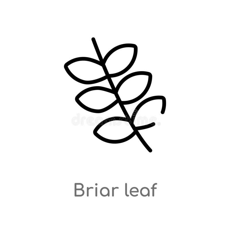 Outline briar leaf vector icon. isolated black simple line element illustration from nature concept. editable vector stroke briar. Leaf icon on white background stock illustration